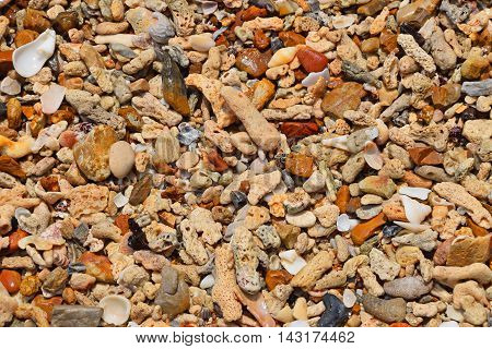 Sea Shore Pebbles, Stones, Corals And Shells