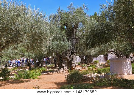JERUSALEM, ISRAEL - OCTOBER 23, 2010: Garden of Gethsemane. Bustling walking tour through the trees