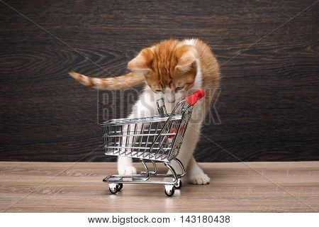 Grocery supermarket trolley. A small kitten looks in an empty grocery cart. Concept - pet products supermarket or Internet service