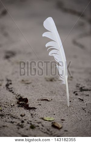 feather stuck in sand on the beach
