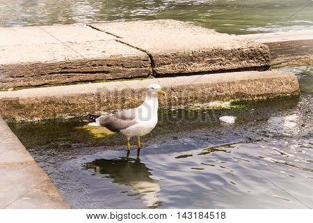 Seagull on water on canal in Venice