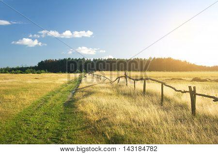 summer sunset on the field. Natural landscape.