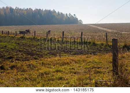 Rural landscape with wooden fence forest man horse with wagon and road at fall on a sunny day