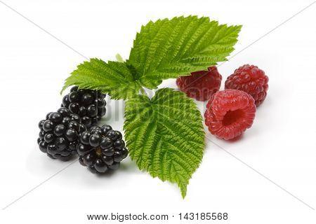 Raspberries and blackberries on the white background