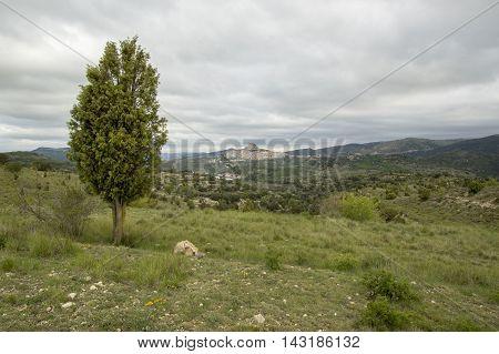Tree and Morella in Castellon, Valencia, Spain
