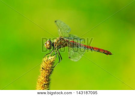 macro of dragonfly sitting on the herbal plant
