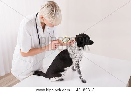 Young Female Vet Looking At Dog's Hair Through Magnifying Glass In Clinic