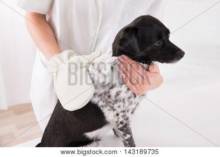 Close-up Of A Veterinary Surgeon Examining Dog