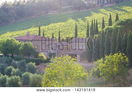 Siena province Italy - August 6 2016: Sunset over the vineyards of the Castello di Albola estate in the Chianti region.