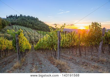 Last rays of sun over vineyards and olive trees in the Chianti region Tuscany Italy.