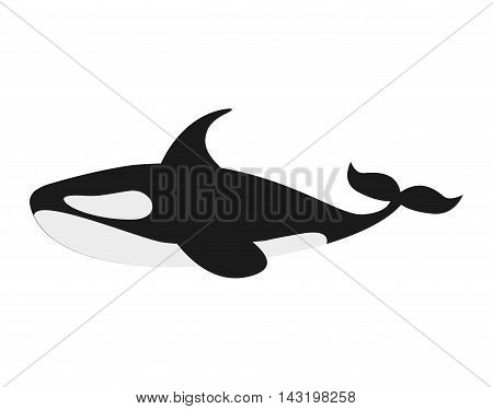 orca whale isolated icon vector illustration design