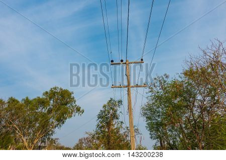 Power line in forest nature background thai