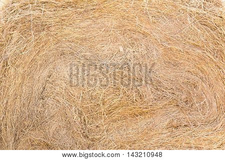Texture Of Dry Straw