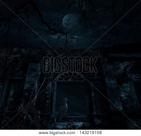 Bird sitting on old ancient window castle over dead tree moon and cloudy sky Spooky background Halloween concept