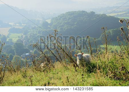 Early morning over Marshwood Vale seen from Colmer's Hill in Devon England