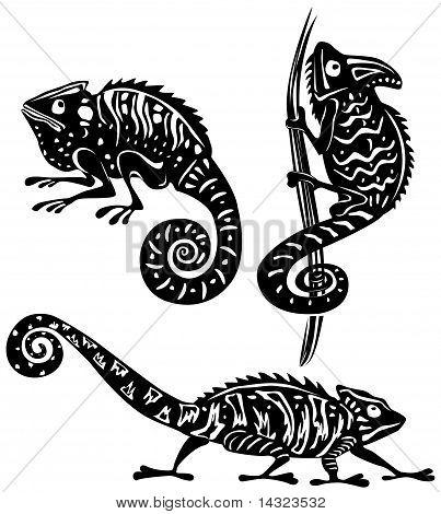 Black and white chameleon
