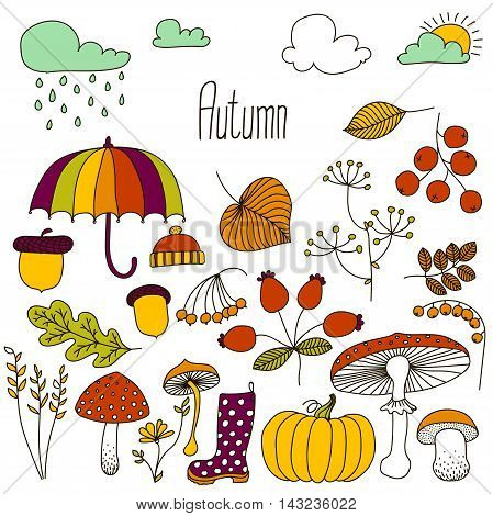 Hand drawn doodle Autumn icons set. Vector illustration. Fall symbols collection. Cartoon various seasonal elements