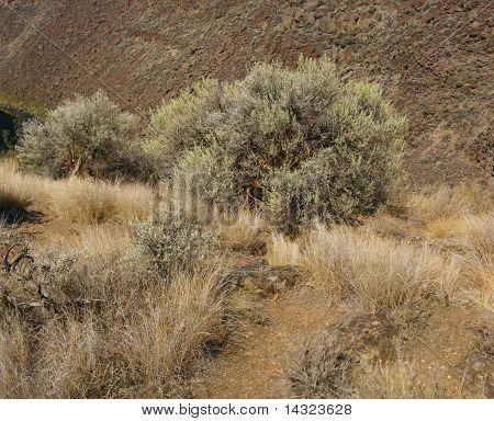 Desert Shrubs And Basalt Cliffs