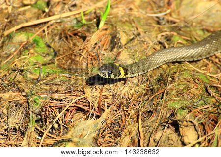 a slithering snake looking at you and it seems that her look sad
