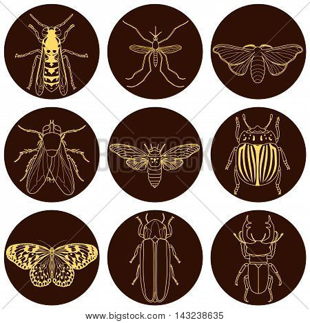 insect icons set. Cicada and stag beetle, firefly and wasp, fly and paperkite butterfly, colorado beetle and mosquito, vector illustration