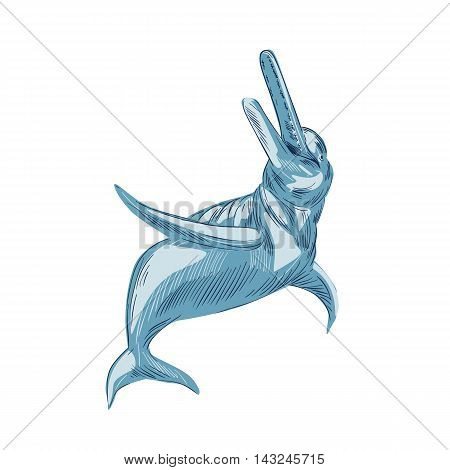 Drawing sketch style illustration of the Amazon River dolphin or boto a widely distributed group of fully aquatic mammals that reside exclusively in freshwater or brackish water looking up set on isolated white background.