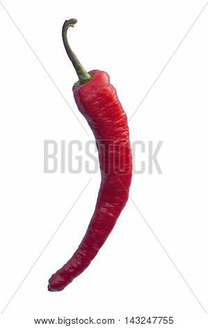 Long hot pepper (Capsicum annuum Long hot pepper). Called Italian long hot pepper also. Image of single pepper isolated on white background