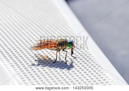 Varicolored fly sits on plastic boat surface