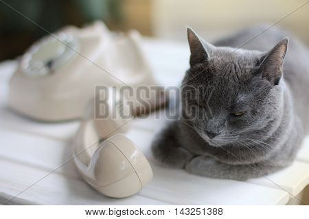 Cat is located near the old phone and is silent lying next to the tube / silent caller with a mustache