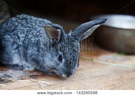 Small cute rabbit. Fluffy gray bunny on wooden background. soft focus