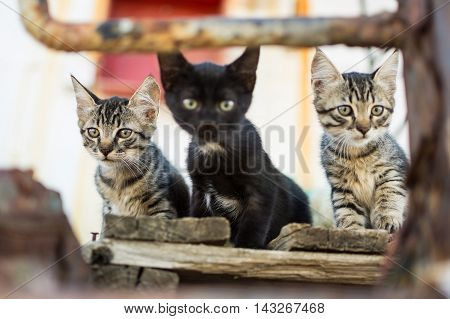Cats on Abandoned Old Rusty Ship. Three Cute Cats on Old Wooden Pallet.