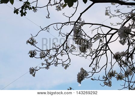 Tree branch of flowers bloom background and vector