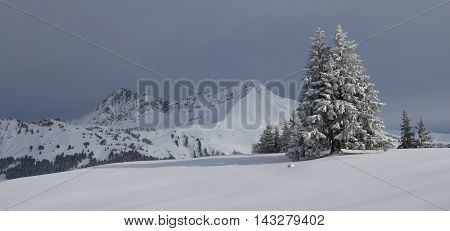 Winter scene in Gstaad Swiss Alps. Snow covered fir and mountains. Mt Gifer and Mt Lauenenhorn.