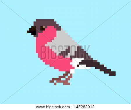Vector pixel art illustration of bullfinch isolated on light blue background.
