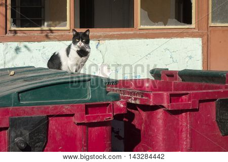 Stray cat looking for food in a garbage container.