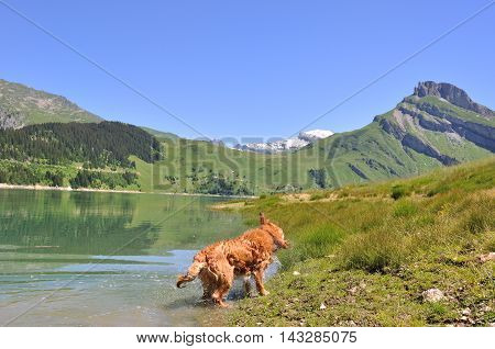 a dog snorting after swimming in a lake in mountain