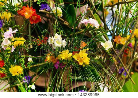 Vibrant flower close-up bouquet of multicolored alstroemeria holiday background