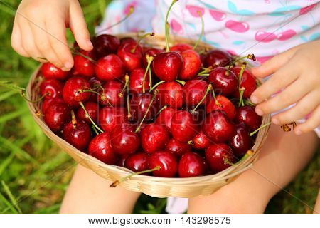 Basket with red wet cherry and hands of little girl on grass