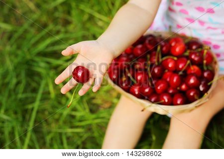 Basket with red wet cherry and hand of little girl with berrie on grass