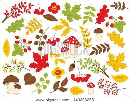 Vector forest autumn set with mushrooms, leaves and berries