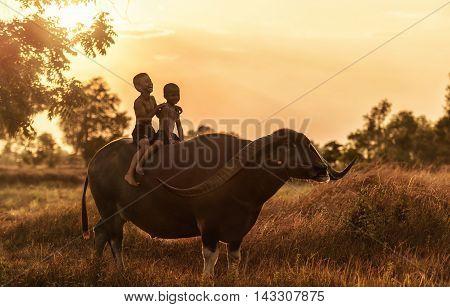 Happy boy riding water buffalo at countryside, Thaialand