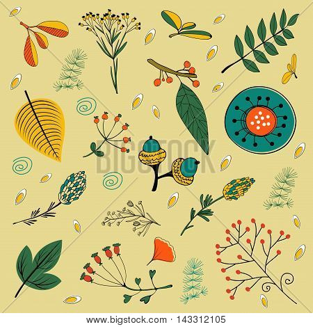 Autumn foliage set with twigs, flowers and leaves. vector illustration