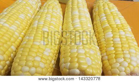 Corn on the cob. Multicolored corn. White and yellow corn.