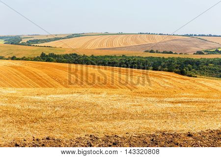Mown Field On A Bright Autumn Day. Collect Grain Harvest. Farming, Idyll Landscape Background