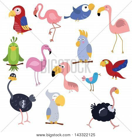 Set of different African birds on white background.