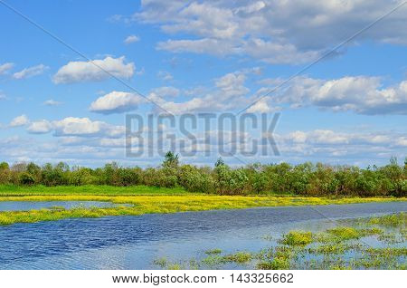 Summer water landscape - rural landscape view of small river in summer sunny day. Summer colorful landscape of river overgrown with yellow flowers