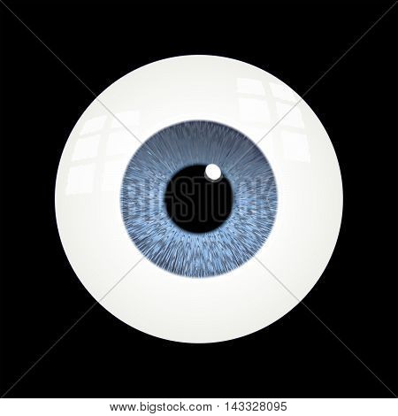 Vector Rendering of a Human Eyeball With Blue Iris.