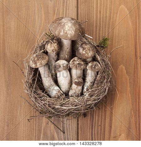 boletus mushrooms in nest on wooden background