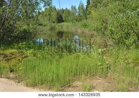 The beauty of short Ural summer. A small lake among bushes and grass.