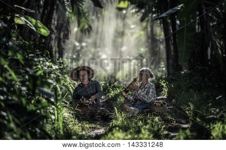 Asian old woman working in the rainforest Thailand