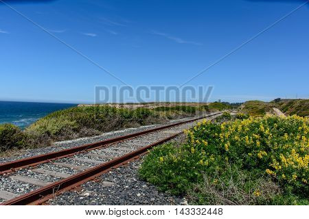 Railroad Track Beside Beach With Flower